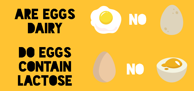 Are Eggs Dairy Free and Do They Contain Lactose